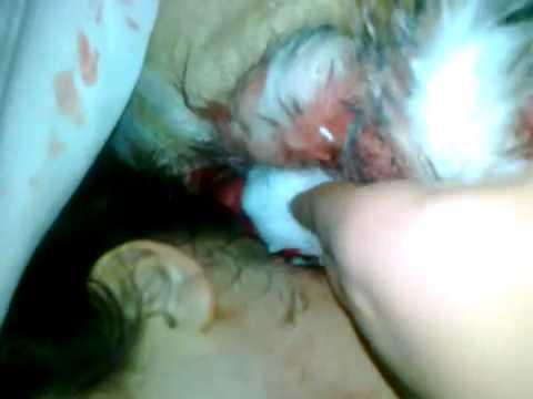 Xxx Mp4 أستشهاد فاطمة فايز القادري عمرها 16 سنة من قرية كحيل درعا بتاريخ بعد أطلاق النار عليها في حاجز في النعيمة 15 2 2012 3gp Sex
