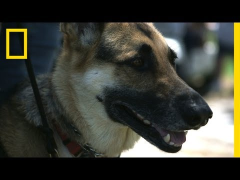 Dog Helps Veteran Cope With PTSD, Diabetes | National Geographic