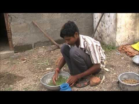 Azolla Foder for increasing milk production Kannada BAIF Karnataka