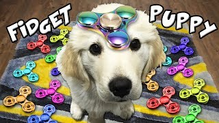 Download EXTREME FIDGET SPINNER PUPPY TRICKS!!! (*Rare DIY Pro Fidget Toy Tricks*) Video