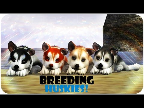 Breeding Huskies! ~ Kennel AngelPaws - Sims 3 Pets