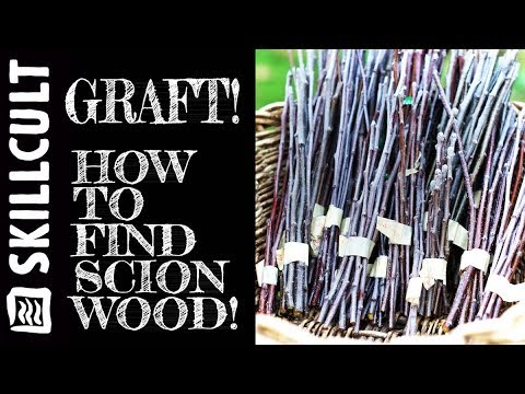 GRAFTING SCIONS, How to Find Fruit Wood Cuttings and Exchanges
