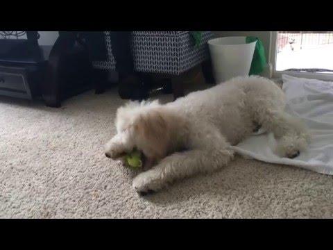 Tucker Got Neutered! It's been almost a week!