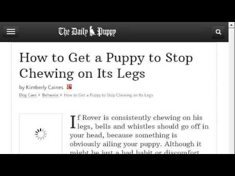 How-To Prevent A Dog From Chewing On Its Paws