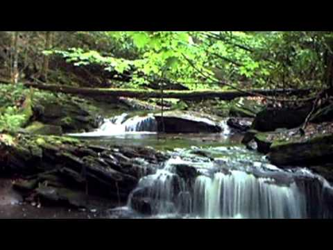 Rainforest Sounds   Water Sound Nature Meditation   Sound Effect 15