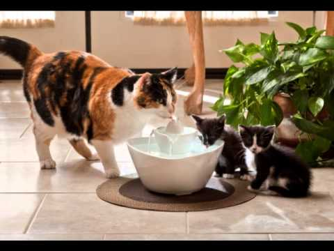 The best way to Remove Quickly Cat Urine Odor from Floor!