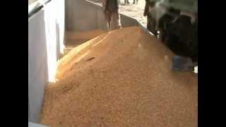 Зерносушилка на дровах, 3,5 т/ч по кукурузе Kepler Weber