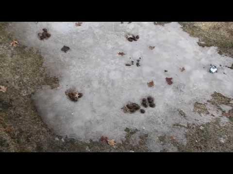 My neighbors dog crap in the yard