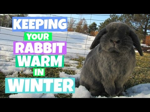 10 Tips for Keeping Your Rabbit Warm During The Winter!