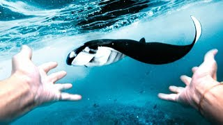 LIVING THE BALI DREAM! DIVING WITH MANTAS! | VLOG² 78