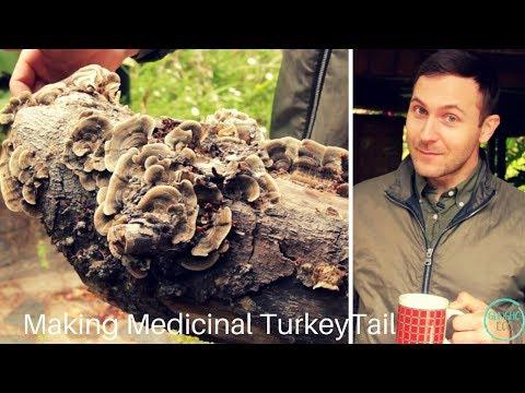 Making medicinal Turkey Tail mushroom extraction.