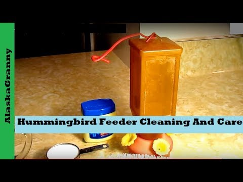 Hummingbird Feeder Tips For Cleaning And Care