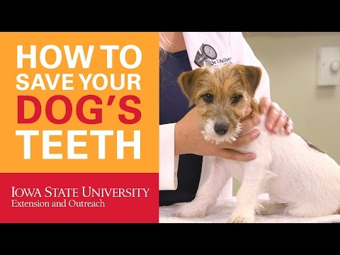 How to Save Your Dog's Teeth