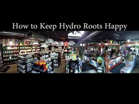 2 Ways to Solve Root Issues in a Hydroponic System
