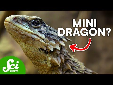 10 Ridiculous Scientific Names