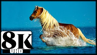 8k video ultrahd Wildlife Animals relaxation video for 8k hdr tv