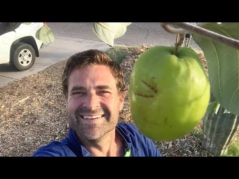 Ep149 - I Saved my JUJUBE to eat on camera with you!
