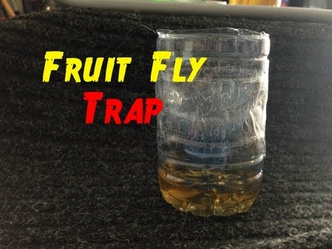 How to Make The Best Fruitfly Trap - Easy