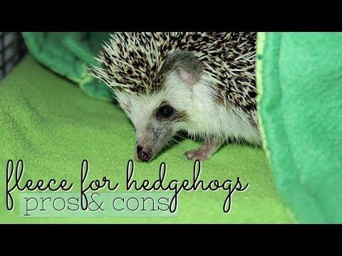 Fleece for Hedgehogs: Pros & Cons