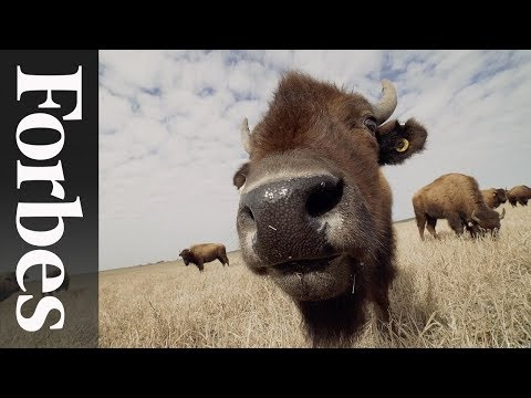 EPIC's Roam Ranch: Reintroducing Bison To Regenerate Austin's Agriculture | Forbes