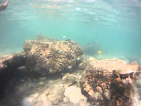 Bahamas_Snorkling_.MP4