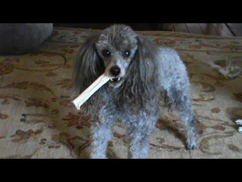 No One Is Taking My Chew Stick