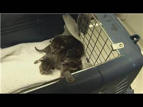 Kitten & Cat Care : What to Do When Kittens Are Born
