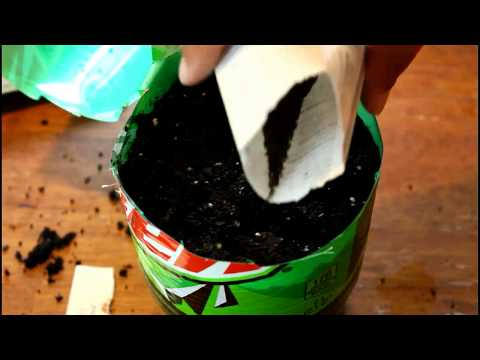Seed Starting: Planting Flower and Vegetable Seeds for Fall