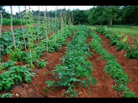 Huerto Agroecológico Modelo- Curso de Productores Agroecológicos