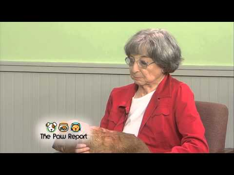The Paw Report, Episode 406 - All About Dachshunds