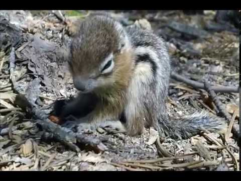 Baby Ground Squirrel and Fly
