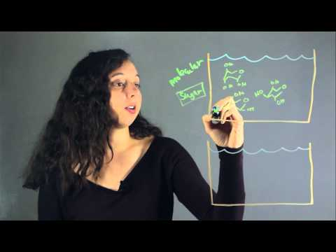 Molecular Compound vs. Ionic Compound Conductivity : Lessons in Chemistry