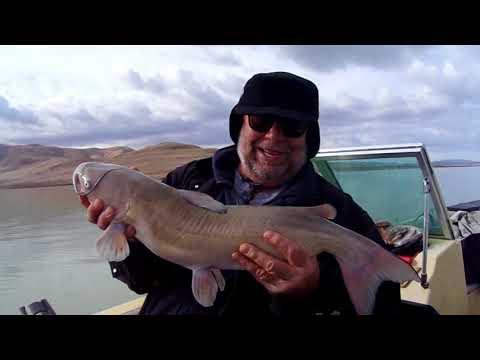 Utah lake fishing Catfish