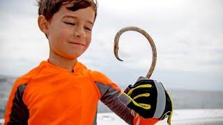 Food Chain Fishing Challenge - Tiny Fish to Giant Fish