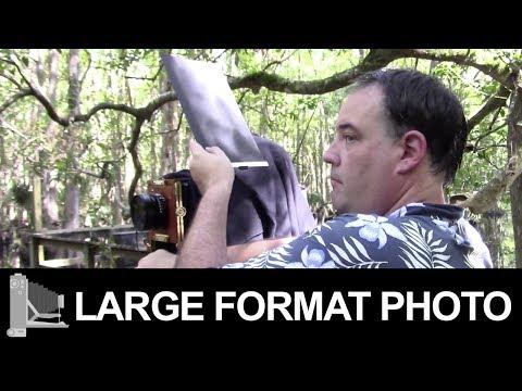 Highlands Hammock State Park ~ Sebring, Florida - Large Format Film Photography