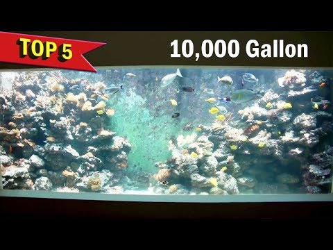 Top 5 YouTubers owned Large Aquariums