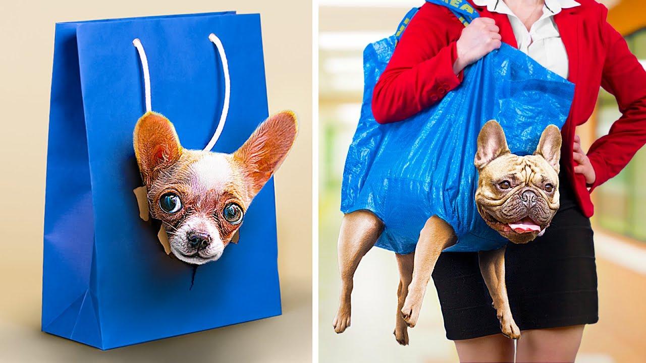 15 Formas de Llevar Animales a la Universidad / Trucos y Bromas con Animales