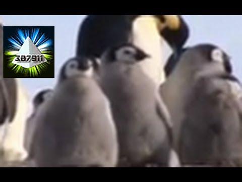 Penguins and Global Warming ☁️ Climate Change Devastates Emperor Penguins ⛅ In Antarctica
