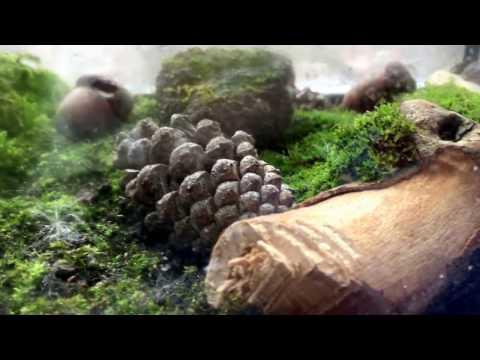 Eternal Moss Terrarium - Fish Tank Version - Day 1