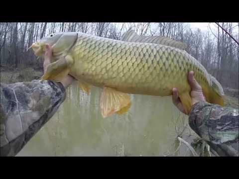 Catching MASSIVE Carp while panfishing