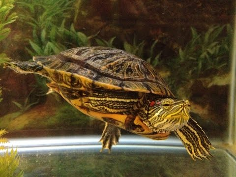 What light does your turtle need? UVB and why it is important.