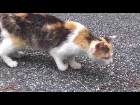 Mother Cat With Broken Leg And Her Sad Plight