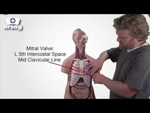 HEART SOUNDS MADE EASY   for nursing students