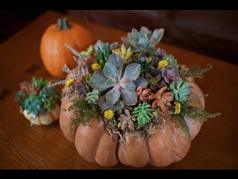 DIY Succulent Pumpkin Centerpiece | DIY with Caitlin | Fall Craft Projects