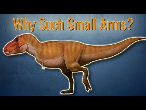 Why Did T.rex Have Small Arms?