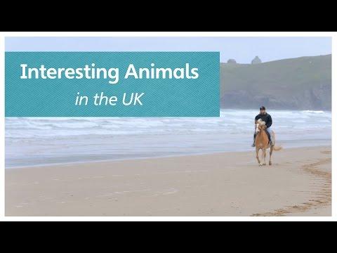 Interesting Animals in the UK
