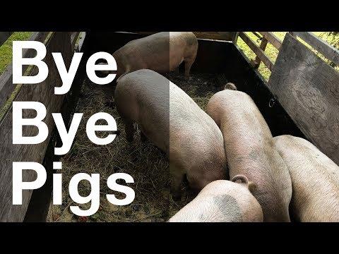 Instafarm: Bye Bye Pigs