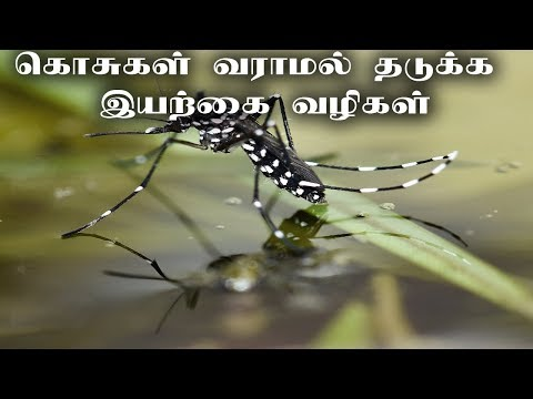 Simple steps to get rid of mosquitoes |Tamil News|