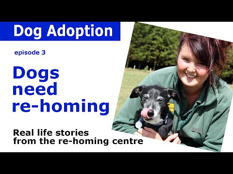 Dog rehoming | Advice and real-life stories from Dogs Trust | Episode 3