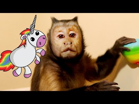 Monkey LOVES Unicorn Poop!